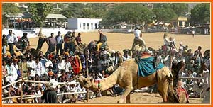 Camel Fair - Pushkar