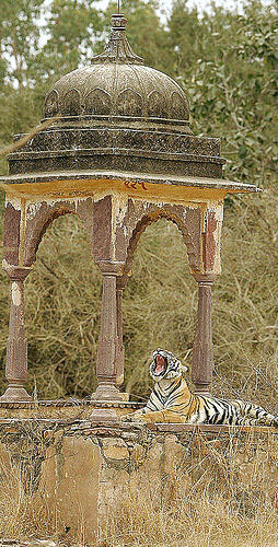 Rajasthan Wildlife Tour,Rajasthan Tiger Tour